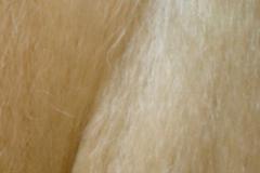 plava blond 613